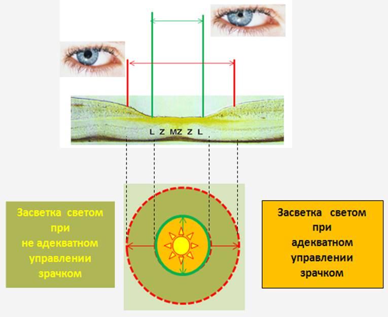 Рис. 5. Сравнение площади световой засветки сетчатки галогенной и светодиодной лампой.